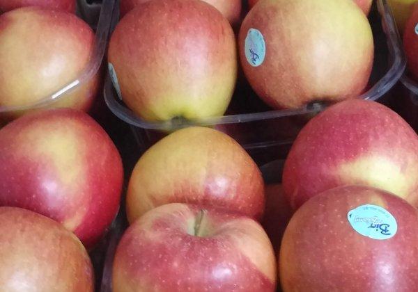 שתי שאלות מפתח על תפוח עץ